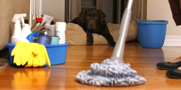cleaning-house